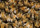 W ulu pszczółki Flory – konkurs